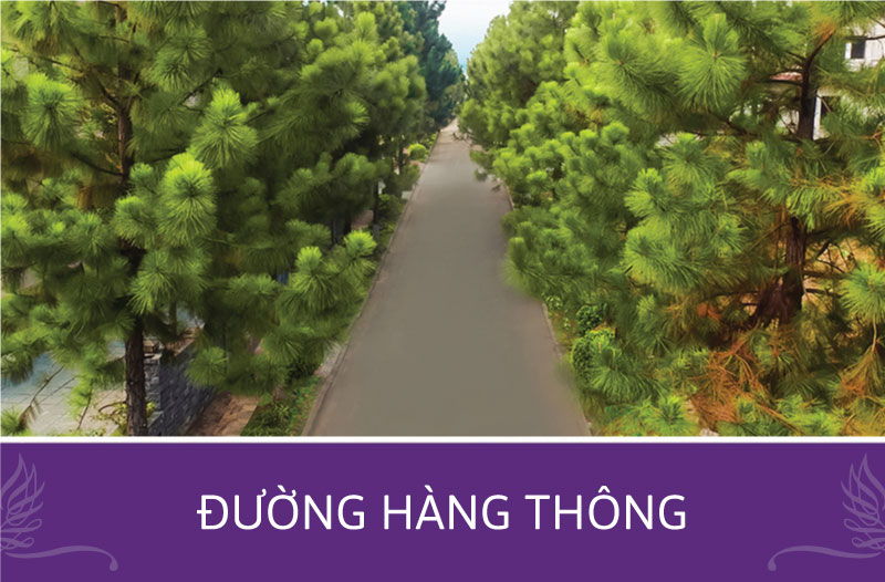 duong-hang-thong-the-phoenix-garden