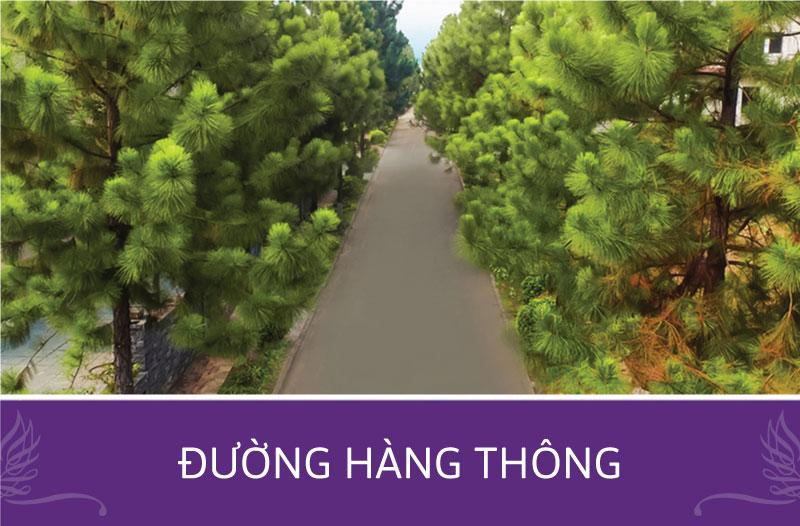 duong hang thong the phoenix garden