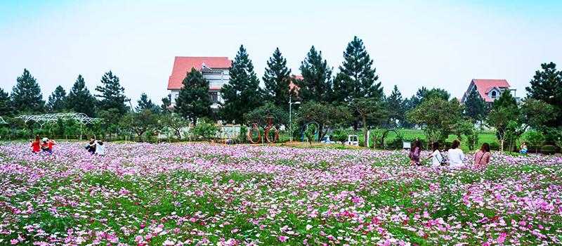 Khám phá thiên nhiên khu sinh thái Đan Phượng The Phoenix Garden